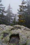 Árvores e rochas em B??dne ska?y, Polônia Foto de Stock Royalty Free
