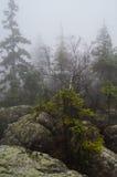 Árvores e rochas em B??dne ska?y, Polônia Imagem de Stock Royalty Free