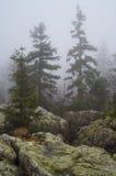 Árvores e rochas em B??dne ska?y, Polônia Imagens de Stock Royalty Free
