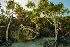 Árvores e rochas na praia da boa Foto de Stock Royalty Free