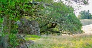 Árvores e rochas no prado montanhoso imagens de stock