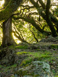 Árvores e rochas no prado montanhoso fotos de stock