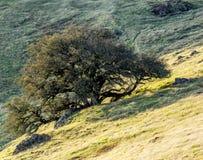 Árvores e rochas no prado montanhoso imagem de stock royalty free