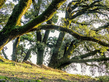 Árvores e rochas no prado montanhoso imagem de stock
