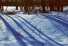 Árvores e sombra Foto de Stock
