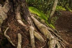 Árvores e suas raizes fotos de stock