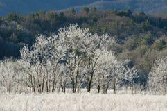 Árvores e terra cobertas geada. Imagens de Stock Royalty Free