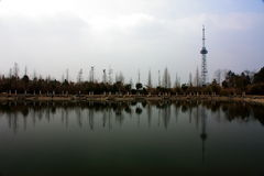 Árvores e torre Fotografia de Stock