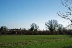 Árvores e tronco de árvores no campo no dia de mola ensolarado, fundo da natureza Fotos de Stock Royalty Free