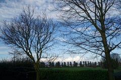 Árvores e tronco de árvores no campo no dia de mola ensolarado, fundo da natureza Foto de Stock Royalty Free