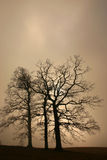 Árvores e tronco raizes Imagens de Stock