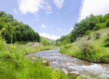 Árvores e um rio em uma montanha Fotografia de Stock