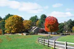 Árvores e vacas coloridas na exploração agrícola do outono Imagens de Stock Royalty Free