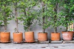 Árvores e vaso Foto de Stock Royalty Free