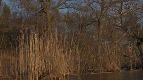 Árvores e vegetação do lago durante a hora do por do sol video estoque