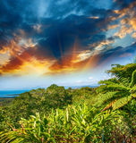 Árvores e vegetação maravilhosas de Queensland, Austrália Imagem de Stock Royalty Free