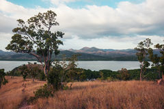 Árvores e vegetação no monte no clima tropical Imagens de Stock Royalty Free