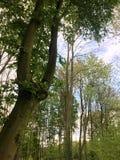 Árvores e vegetação verde imagens de stock