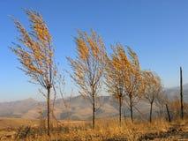 Árvores e vento Foto de Stock Royalty Free