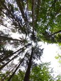 Árvores e vista à infinidade imagem de stock royalty free