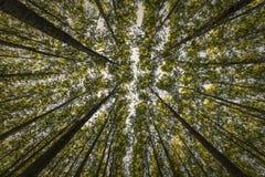 Árvores elevadas fotos de stock royalty free