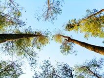Árvores elevadas Imagens de Stock