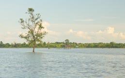 Árvores em áreas inundadas fotografia de stock