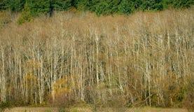 Árvores em Autumn Along Mud Bay, Puget Sound, Olympia, Washington imagem de stock
