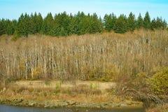 Árvores em Autumn Along Mud Bay, Puget Sound, Olympia, Washington fotografia de stock