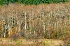 Árvores em Autumn Along Mud Bay, Puget Sound, Olympia, Washington foto de stock