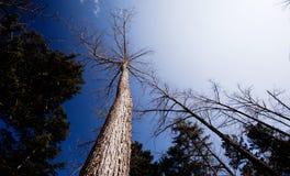 Árvores em Bipengou Fotos de Stock Royalty Free