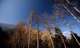 Árvores em Bipengou Imagem de Stock