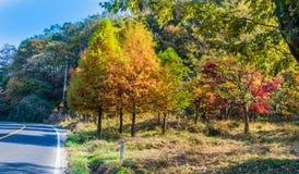 Árvores em cores da queda ao lado da estrada no campo Fotografia de Stock Royalty Free
