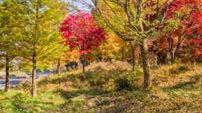 Árvores em cores da queda ao lado da estrada no campo Fotos de Stock