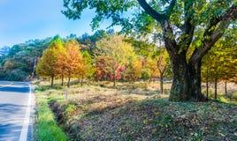 Árvores em cores da queda ao lado da estrada no campo Imagens de Stock