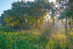 Árvores em cores do outono ao longo de um campo nevoento no nascer do sol na queda Foto de Stock Royalty Free