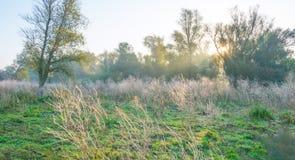 Árvores em cores do outono ao longo de um campo nevoento no nascer do sol na queda Imagens de Stock Royalty Free