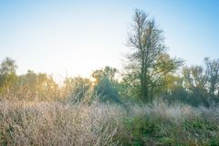 Árvores em cores do outono ao longo de um campo nevoento no nascer do sol na queda Foto de Stock