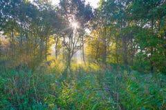 Árvores em cores do outono ao longo de um campo nevoento no nascer do sol na queda Imagem de Stock