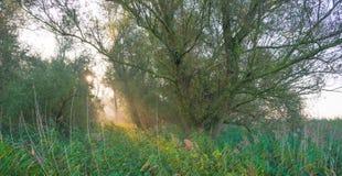 Árvores em cores do outono ao longo de um campo nevoento no nascer do sol na queda Imagens de Stock
