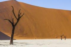 Árvores em Deadvlei, ou Vlei inoperante, em Sossusvlei, no Namib-Nau Imagem de Stock