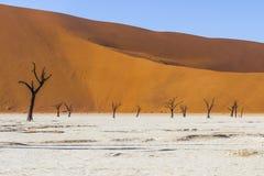 Árvores em Deadvlei, ou Vlei inoperante, em Sossusvlei, no Namib-Nau Foto de Stock