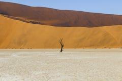 Árvores em Deadvlei, ou Vlei inoperante, em Sossusvlei, no Namib-Nau Fotos de Stock Royalty Free