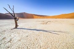 Árvores em Deadvlei, ou Vlei inoperante, em Sossusvlei, no Namib-Nau Imagens de Stock Royalty Free