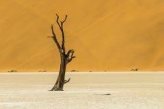 Árvores em Deadvlei, ou Vlei inoperante, em Sossusvlei, no Namib-Nau Imagens de Stock
