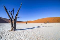 Árvores em Deadvlei, ou Vlei inoperante, em Sossusvlei, no Namib-Nau Fotografia de Stock