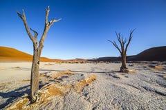 Árvores em Deadvlei, ou Vlei inoperante, em Sossusvlei, no Namib-Nau Fotos de Stock