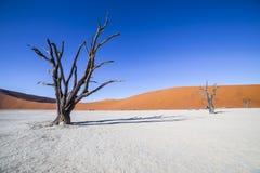 Árvores em Deadvlei, ou Vlei inoperante, em Sossusvlei, no Namib-Nau Imagem de Stock Royalty Free