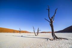 Árvores em Deadvlei, ou Vlei inoperante, em Sossusvlei, no Namib-Nau Fotografia de Stock Royalty Free
