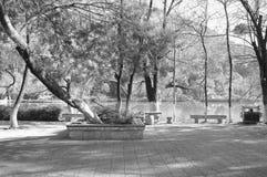 Árvores em Dragon Pool preto - parque chinês fotografia de stock